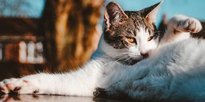 What skin and fur problems can cats have?