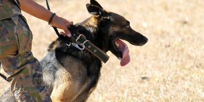 Soldati e cani militari: la decisione del Ministero