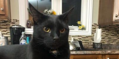gato negro en casa