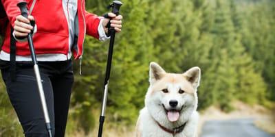 Senderismo con tu perro: 8 consejos prácticos para subir a la cima de la montaña