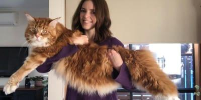 El gato más grande del mundo pesa 15 kilos: así es su vida