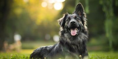 perra negra