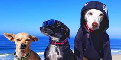 psy nad morzem