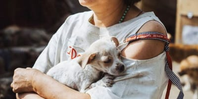 It looks the dog meat trade is finaly coming to an end