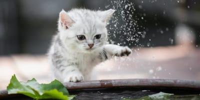 8 semplici trucchi per rinfrescare il tuo gatto in estate!