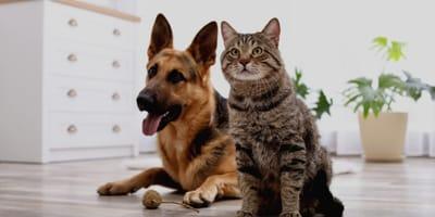 Lockdown con animali domestici: lo studio della veterinaria Pirrone