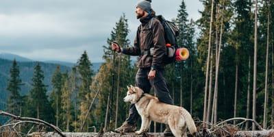 6 rutas de senderismo para hacer con tu perro dentro y fuera de España
