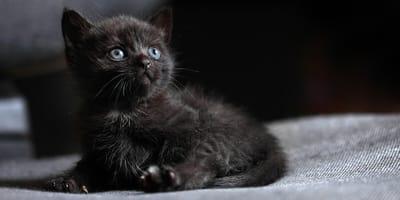 gato negro cachorro