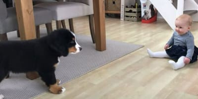Baby meets puppy