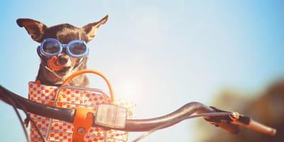 perro dentro cesta bicicleta