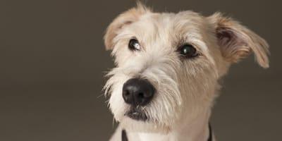 Tauber Hund: Tipps für den richtigen Umgang