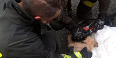 pompiere salva un cane