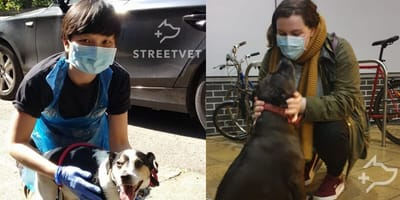 vets treating dogs on the street