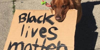 This furry guy went for a walk with protestors