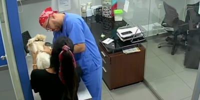 Este perro no quiere que lo vacunen, ¡y su amigo felino corre al rescate!