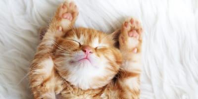 gato recien nacido