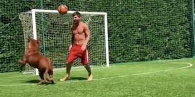 Pies Messiego: zobacz jak ogromny dogue de Bordeaux radzi sobie na boisku!