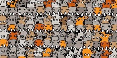 Krowy_pies_zagadka_znajdź_na_obrazku