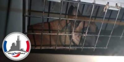 cane-dentro-una-gabbia