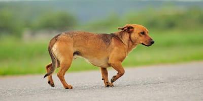 perrito abandonado corre detras de propietarios