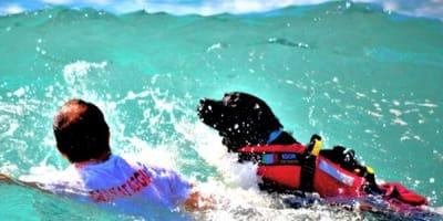 cane-da-salvataggio-con-istruttore-in-mare
