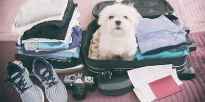 Come organizzare le vacanze col cane Covid-safe in Italia?