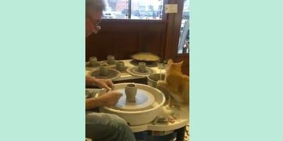 Un gato haciendo ceramica