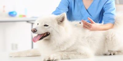 Plan de vacunación para perros