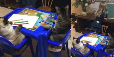 Cats taught how to draw