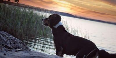 Mecklenburgische Seenplatte: Das Land der 1000 Seen mit Hund erkunden