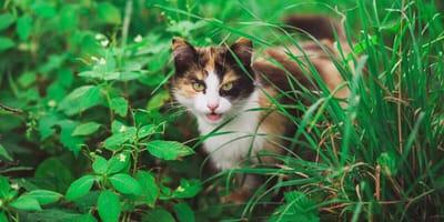 Selten aber tödlich: Tollwut bei Katzen
