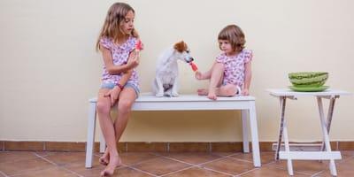 Czy pies może jeść lody?