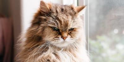 Las razones de este gato para que el humano se vaya de la casa están haciendo llorar de risa a todos