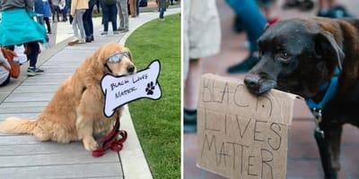 prostestujące-psy-na-ulicach