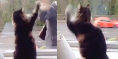 Cat waving through window