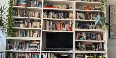 Kätzchen versteckt sich im Bücherregal: Nur Menschen mit hohem IQ finden es auf Anhieb!