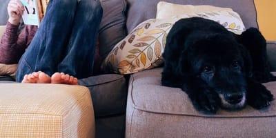 I cambiamenti nella relazione uomo-cane dopo il lockdown (Video)