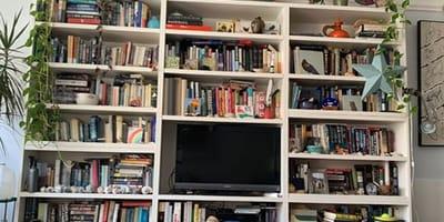 Biblioteczka z ukrytym kotem
