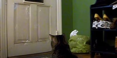 Cat waiting by front door