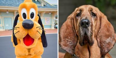 Disney-Hund Pluto links, Bloodhound rechts