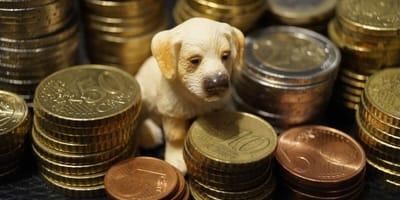 14 geniale Spartipps für Hundehalter