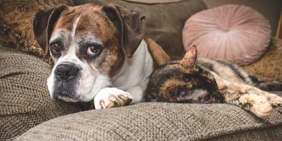 Problemas neurológicos en perros ancianos: síntomas y tratamiento
