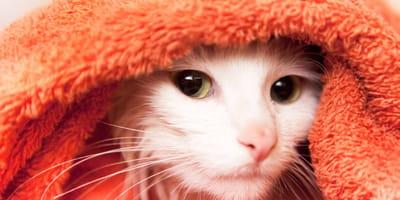 Tips para bañar a un gato ¡sencillos y efectivos!