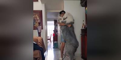 Perro pastor inglés bailando