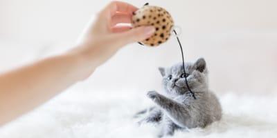 10 tips para alimentar a un gato bebé correctamente