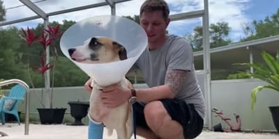 dog wearing cone hugged by owner