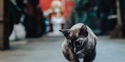 gattino in strada