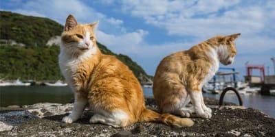 gatos de la isla cuale en puerto vallarta