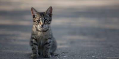 gato carretera