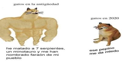 Meme perro fuerte perro pequeño